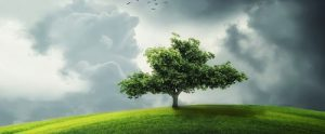 lonely tree on a sunlit grassy hill under clouds